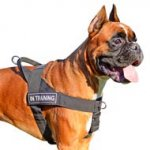 Lightweight Patch Nylon Dog Harness for powerful Boxer