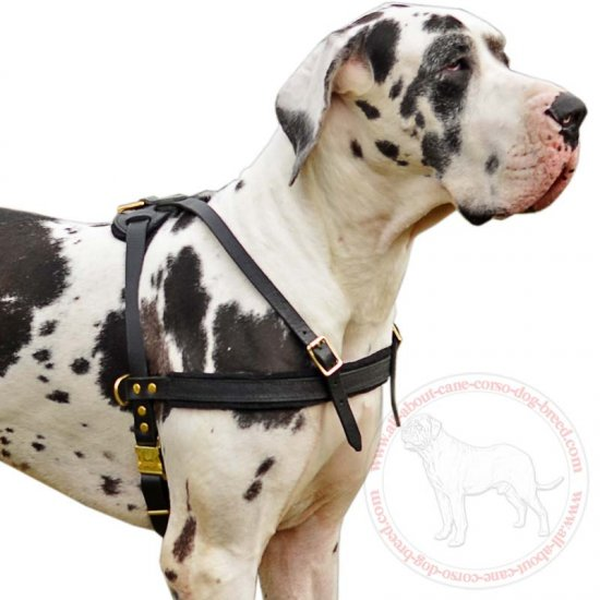 Excellent Pulling/Tracking Leather Dog Harness for Great Dane