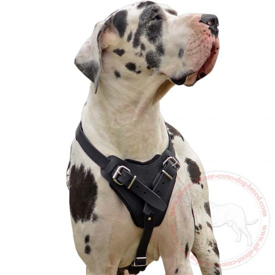 Agitation/Attack/Protection Leather Dog Harness for Great Dane Dogs