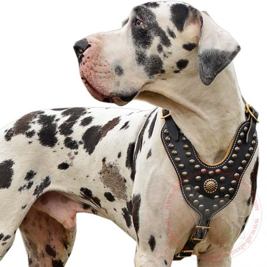 Royal Nappa Padded Leather Dog Harness for Great Dane Dog Breed