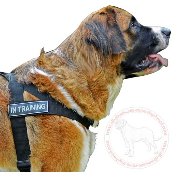 Weatherproof Nylon Patch Dog Harness For Moscow Watchdog's Service Work