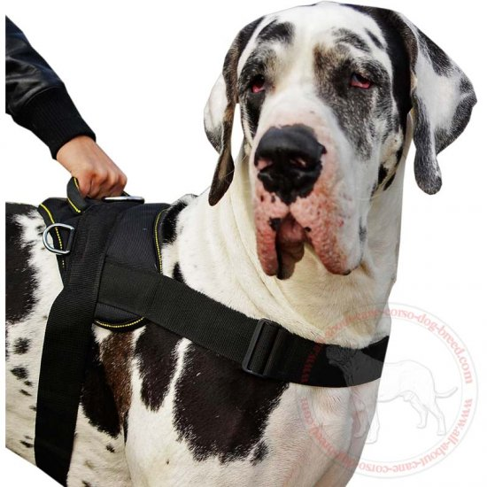 All-Weather Nylon Great Dane Dog Harness with All Over Padding