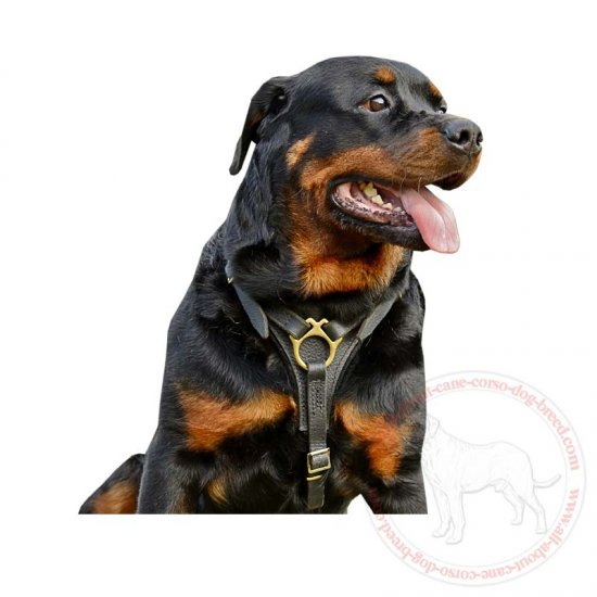 Well-Made Tracking Leather Dog Harness-Exclusive Creation for Great Rottweilers