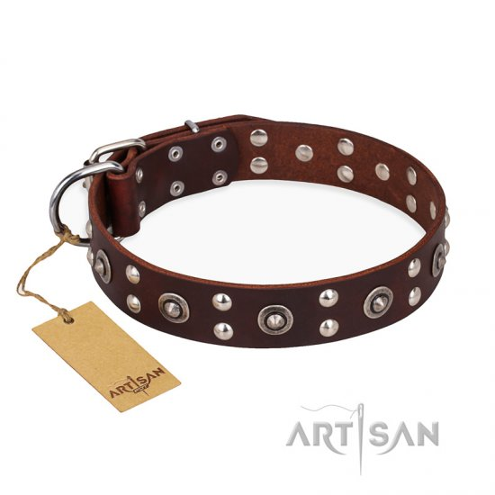 """Pirate Treasure"" FDT Artisan Exciting Brown Leather Cane Corso Collar with Studs"