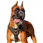 Great Tracking Leather Dog Harness for Handsome Boxer