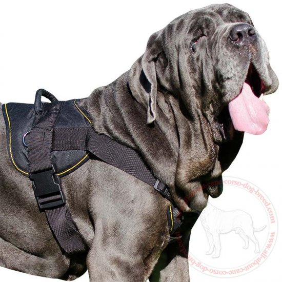 Best Tracking Nylon Chest Plate Harness for Mastino Napoletano Breed