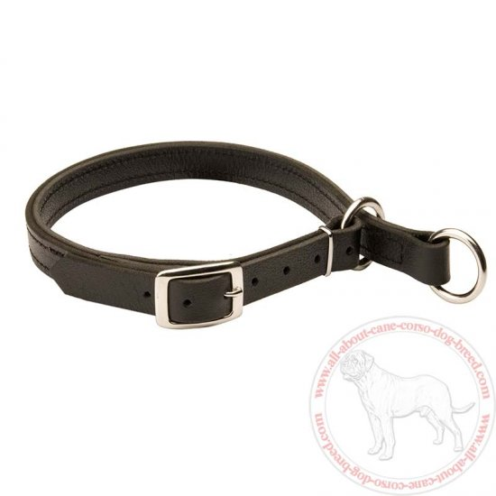 Leather Slip Cane Corso Collar w/h Nickel Hardware