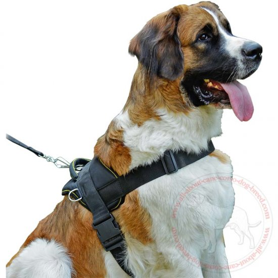 Superior Training Nylon Dog Harness for Moscow Watchdog