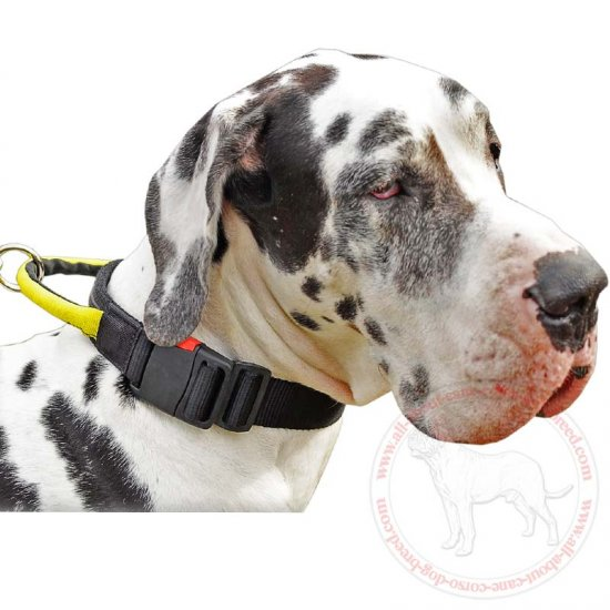 Universal Nylon Dog Collar with Strong Handle for Great Dane