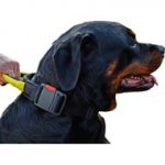 Weatherproof Nylon Dog Collar with Handle for Rottweiler dog breed