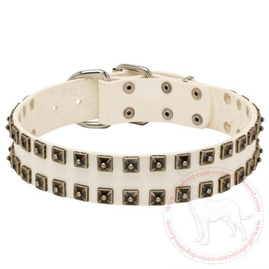 Stylish White Leather Cane Corso Dog Collar