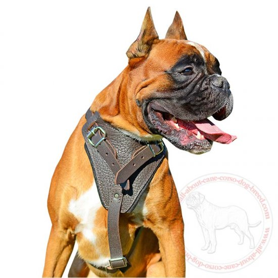 Attack/Agitation Training Leather Dog Harness for Comfort of Boxer