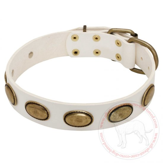 Exclusive White Leather Dog Collar with Oval Brass Plates