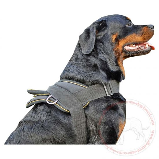 all weather nylon dog harness sar rottweiler dog harness padded all over