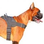 Most Practical Multipurpose Nylon Dog Harness for Boxer Dog