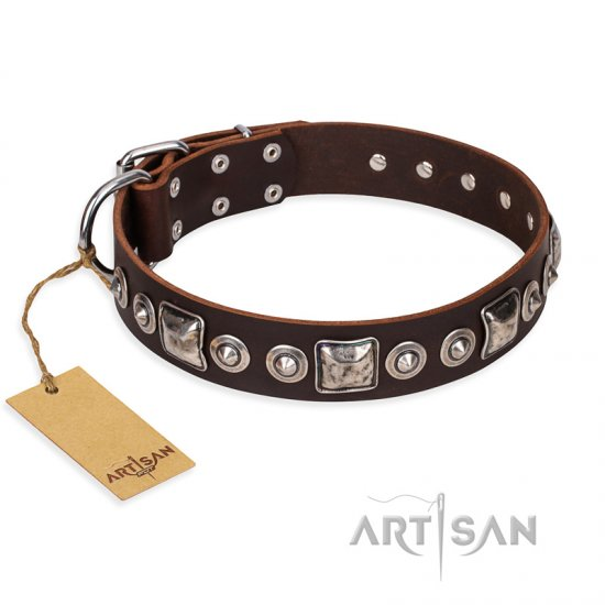 """Pierian spring"" FDT Artisan Brown Leather Cane Corso Collar with Silvery Decorations"