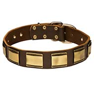 Designer Leather Collar for Cane Corso with Brass Plates