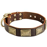 Walking and Training Cane Corso Collar with Vintage Plates