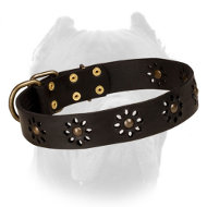 'Spring Mood' Leather Cane Corso Collar for Everyday Walking