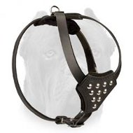 Walking Leather Cane Corso Puppy Harness