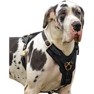 Extremely Durable Leather Dog Harness for Walk/Work with Great Dane