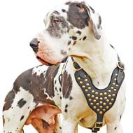 Classy Brass Studded Leather Dog Harness for Tallest Dog-Great Dane Breed