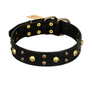 FDT Artisan 'Heavy Metal' Leather Cane Corso Collar with Skulls and Half-Balls 1 1/2 inch (40 mm)