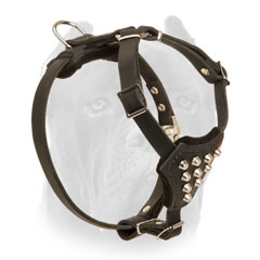 Adorned Leather Cane Corso Harness for Puppy with Studs