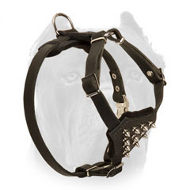 Splendid Leather Cane Corso Puppy Harness with Spiked Chest Plate