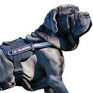 Lightweight Reflective Harness for Mastino Napoletano's SAR, K9, Police Training