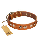 """Precious Relic"" FDT Artisan Tan Leather Cane Corso Collar Adorned with Old Bronze Look Studs"