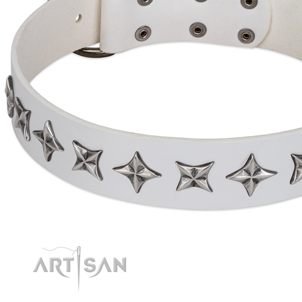 Fancy walking studded dog collar of durable full grain natural leather