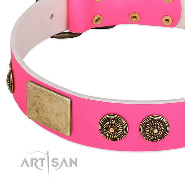 Comfortable dog collar created for your impressive canine