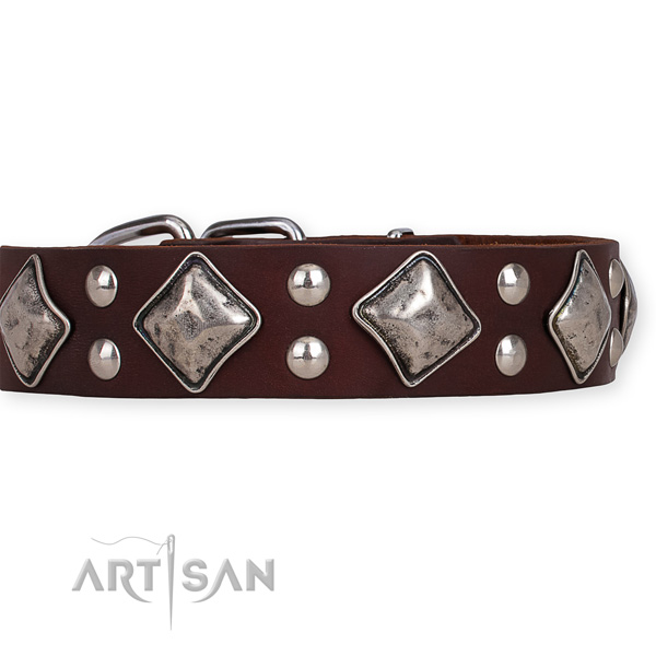 Natural leather dog collar with exceptional rust resistant decorations