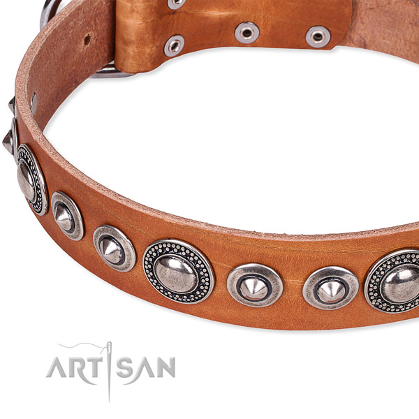 Walking adorned dog collar of finest quality full grain leather