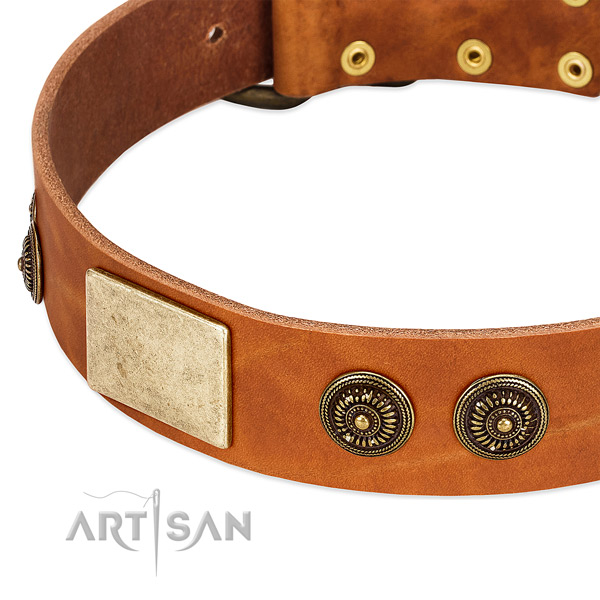 Top notch dog collar crafted for your impressive dog