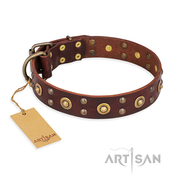 Significant leather dog collar with rust resistant fittings