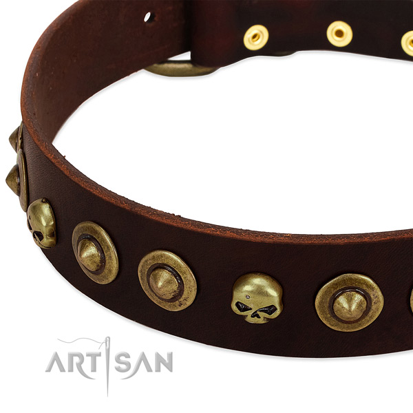 Significant adornments on leather collar for your pet