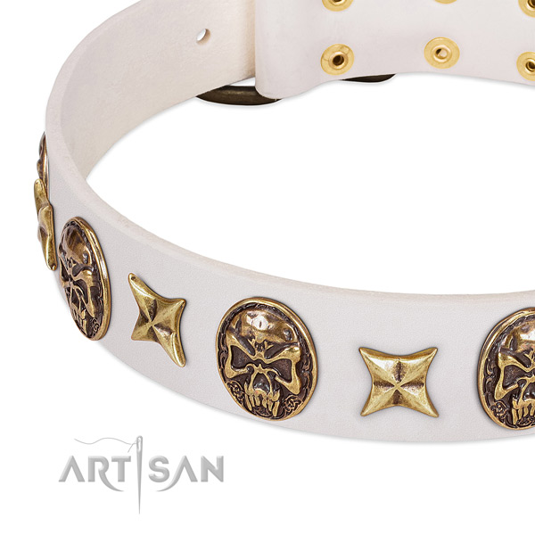 Extraordinary dog collar crafted for your handsome doggie