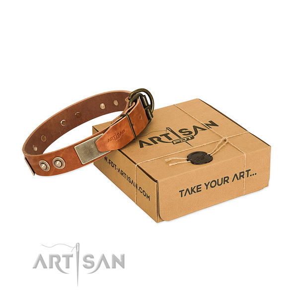 Rust resistant buckle on dog collar for stylish walking