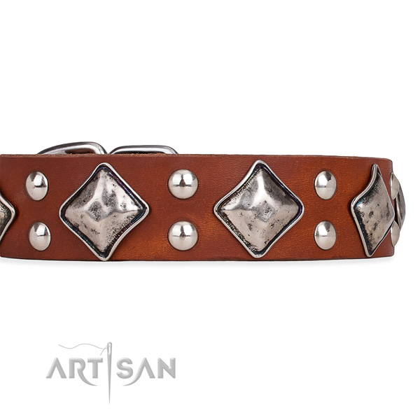 Full grain genuine leather dog collar with impressive rust-proof studs