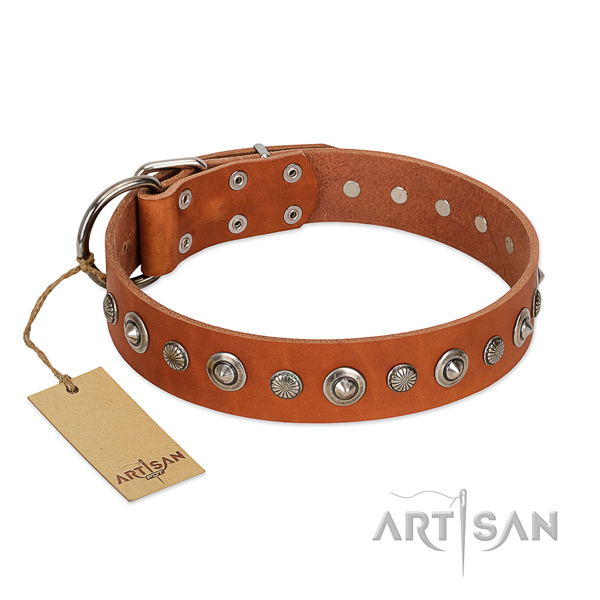 Top notch full grain natural leather dog collar with fashionable embellishments