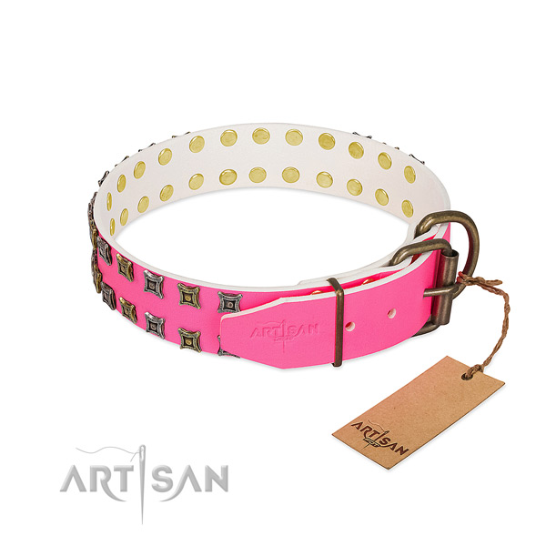 Leather collar with fashionable adornments for your four-legged friend