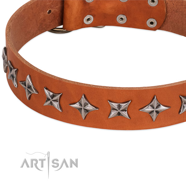 Comfy wearing adorned dog collar of quality full grain genuine leather