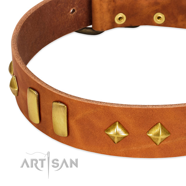 Stylish walking full grain genuine leather dog collar with unique studs