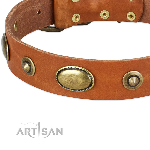 Corrosion resistant studs on full grain leather dog collar for your dog