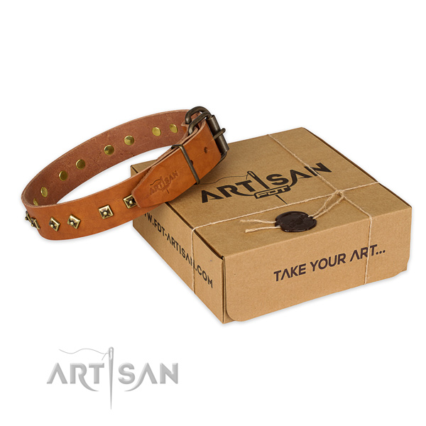 Rust resistant buckle on full grain leather dog collar for fancy walking