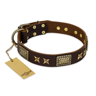 """Sparkling Bronze"" FDT Artisan Genuine Leather Cane Corso Collar with Bronze Look Stars and Plates"