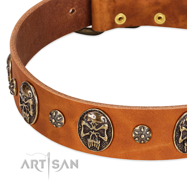 Durable studs on leather dog collar for your pet