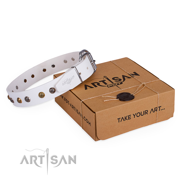 Daily use dog collar with Stylish rust resistant adornments